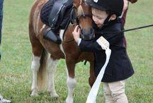 Nothing else but horses