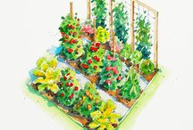 Vegetable & Herb Gardens / Layouts, plans, designs
