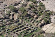 Proyecto de caracterización de sistemas productivos agrícolas. Provincia de Tamarugal / El objetivo general del proyecto es realizar una caracterización de los sistemas productivos agrícolas presentes en la Provincia de Tamarugal a partir de información hidrológica, tecnología asociada, y productividad.  http://www.ciren.cl/proyectos/programa-de-zonificacion-hidrica-de-la-provincia-del-tamarugal-en-la-region-de-tarapaca-para-el-encadenamiento-productivo-agroalimentario/