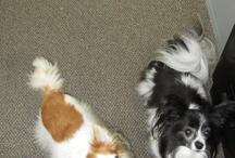 Staff pets!