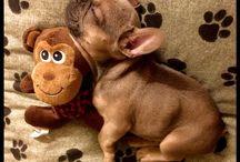 Cute animals ♡