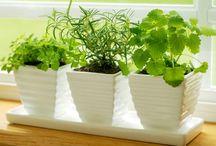 SOW | Growing Veggies