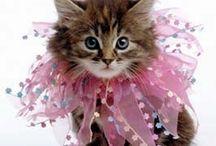 Kit Cats!