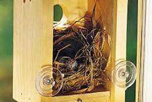 Bird Houses / by Mary Lou