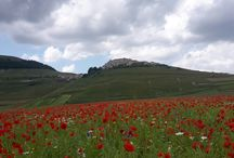 "Castelluccio di Norcia, July 2016 enchanting flowers show / Castelluccio di Norcia is a small village, that lies in the ""Parco nazionale dei Monti Sibillini"" in the Umbria region, where the famous lentils are coltivated. Every year between late May and June, the plateau di Castelluccio di Norcia attracts people from all over the world to admire the magnificent mountain colorful scenary. For few weeks a mosaic of different varieties of wildflowers brokes the monotony of green grassland."