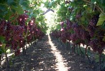 When i grow up i want land where i can grow grapes, raise bees and have some chickens.... / by Samantha Cooper