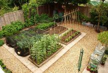 Garten mit Beeten