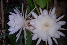 Mes fleurs et mon jardin
