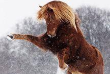 Stijgerent paard