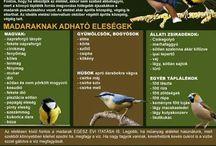 madáretetés