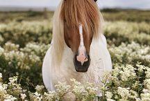 ATLAR - HORSES