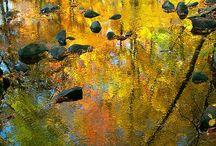 Heartwarming fall/autumn