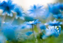 ::: Blue