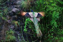 Birds / by Linda Murdock