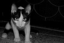 Notorious / la rutina de un gato