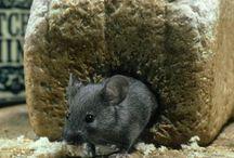 Pest Control Community / Pest Control Tips & Advice