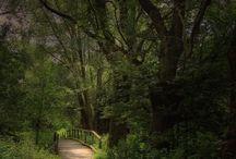 Moonlight woods-projekt