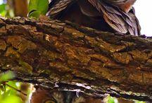 Flügel / FLÜGEL... Fliegen, Schweben, Schwimmen, Springen... Flügelschlag... alles, was damit zu tun hat/ so wirkt... realistisch oder im märchenhaften Sinn... Federn, Federkleid, Vögel, Insekten... Engel - Teufel, Tiere, Träume, Luft, Wasser uvm ... realistisch, fotografiert, märchenhaft,  gefühlt, gemalt, gebastelt, gebaut, bewegt...