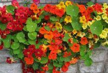 световыносливые растения