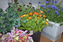 Rich Pickings / A selection of our flowers having been cut and waiting to show off