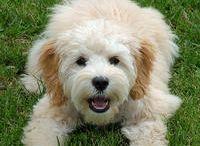 Pet Wish List / by Dawn Thompson