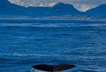New Zealand – my dream trip