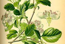 Herbs and flowers / by Artemisia Gentileschi
