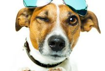 Living With Pets / Great tips for sharing your life with dogs, cats, rabbits and more. We look at pet care plus all the fun you can have with your furry friends.