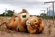 Yoga Animals / Yoga asanas made by animals