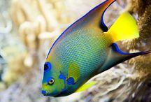 phtographie marine / magnifiques couleurs des poissons tropicaux