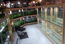 akvarisztika