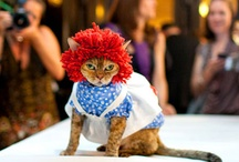 Cat Costume Pet  / by Jennifer Newby