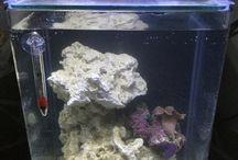 5g reef tank