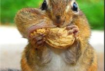 Whole Foods Plant Based Breakfast / Eat to Live Breakfast Ideas
