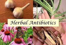 Herbs & Homeopathy for Health & Home