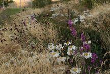 garden \\ planting \\ prairie
