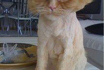 cat-miaou