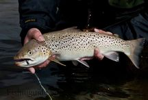 Trout fishing with Fishinguide Scotland  / Trout fishing in Scotland