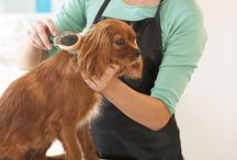 Pet Grooming / Pet grooming refers to both the hygienic care and cleaning of a pet, as well as a process by which a pets physical appearance is enhanced for showing or other types of competition.