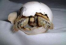 Tortugas / Adoro las tortuga.