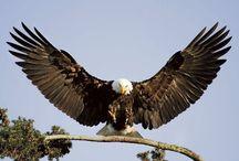 sas-eagle