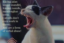 Anti-Street Harassment Week 2017