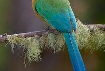 Doug & Jen's amazing bird from Brazil