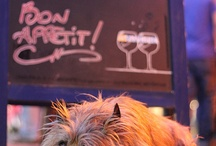Cairn terrier / by MaryAnn Urbanik