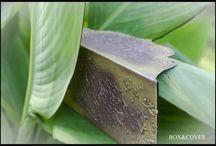 Lilac Line