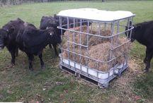 Cow/calf's