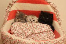 Pisicite
