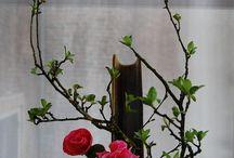 Flowers & Ikebana