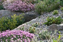 Alpine/shale gardens