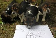 """☜♥☞  Animals Love ☜♥☞ / Quando non sei tu la vittima, diventa molto facile giustificare crudeltà, ingiustizia, disuguaglianza, schiavismo, assassinio. Questo stiamo facendo subire agli animali. [Gary Yourofsky] / by """"Basilico & Patchouli"""""""